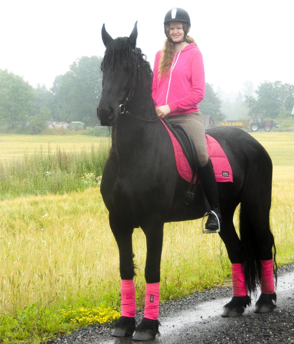 dressage-horse