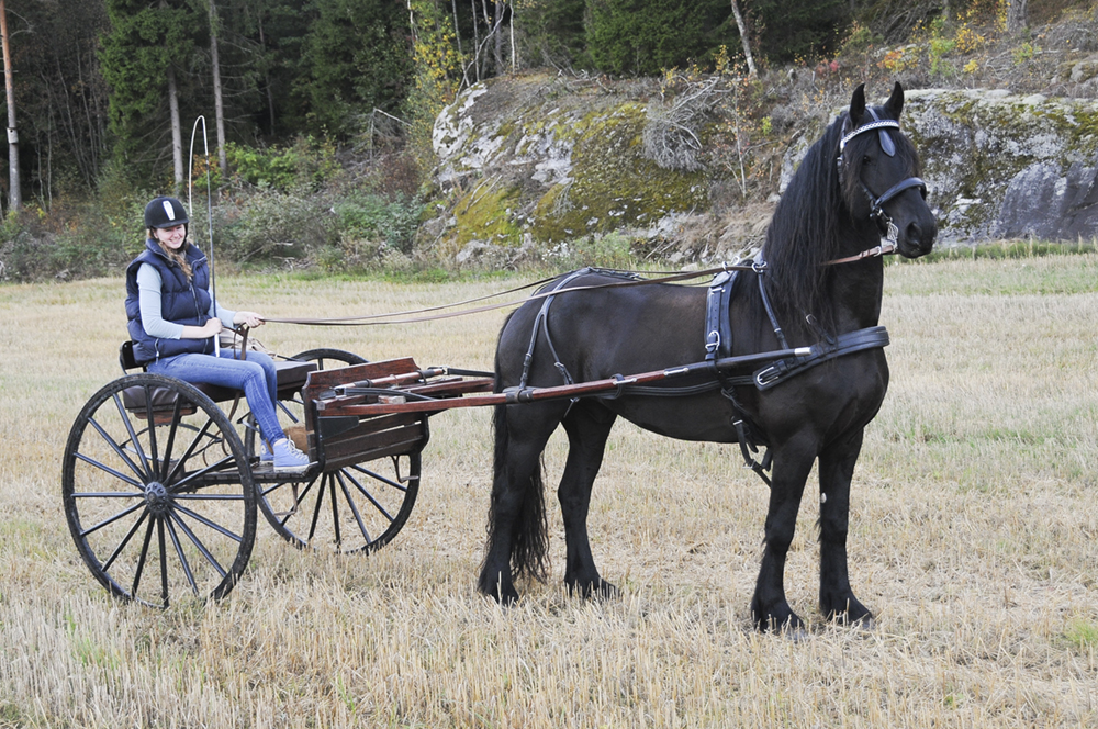 friesian-cart