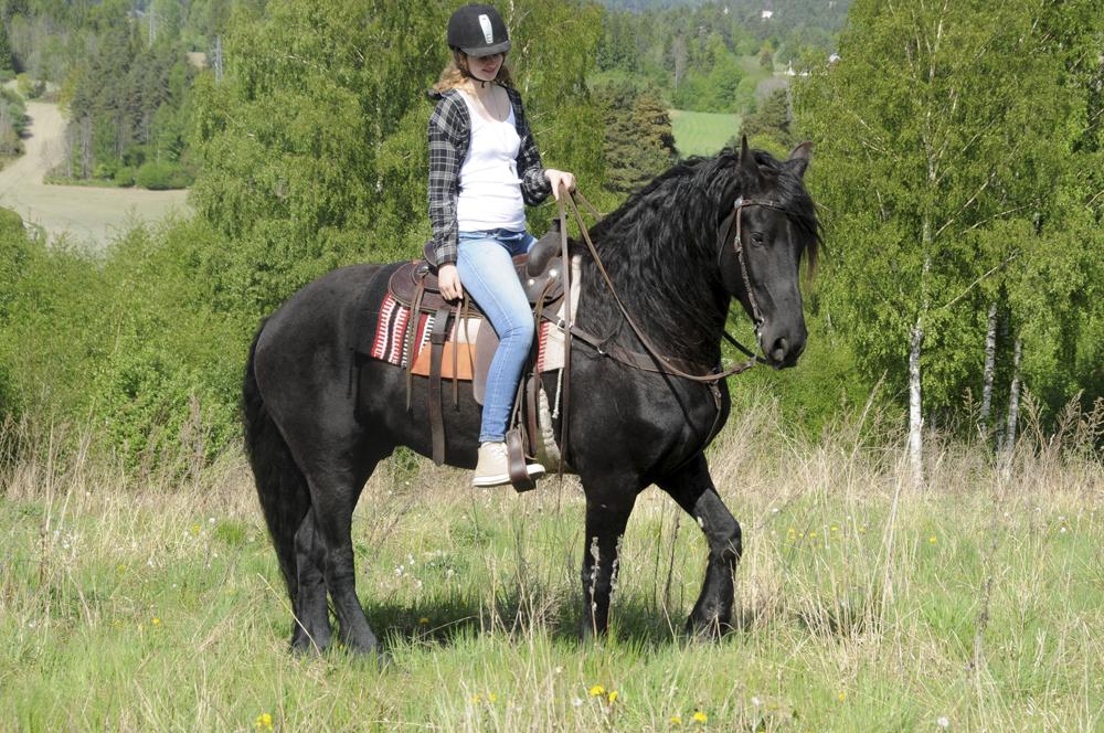friesian-horse-western
