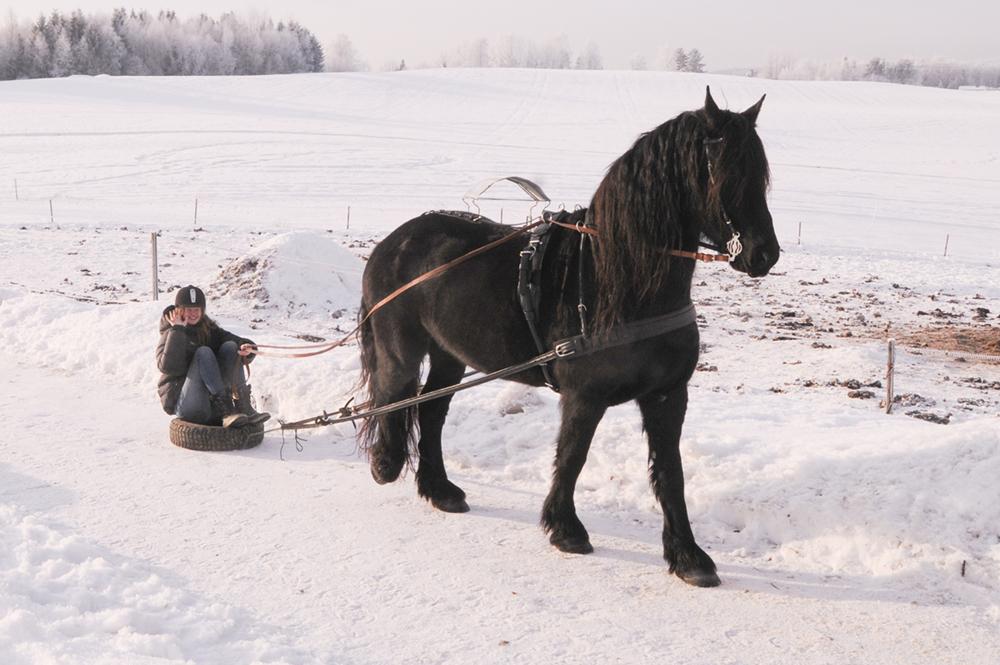 teaching-horse-to-drive-cart