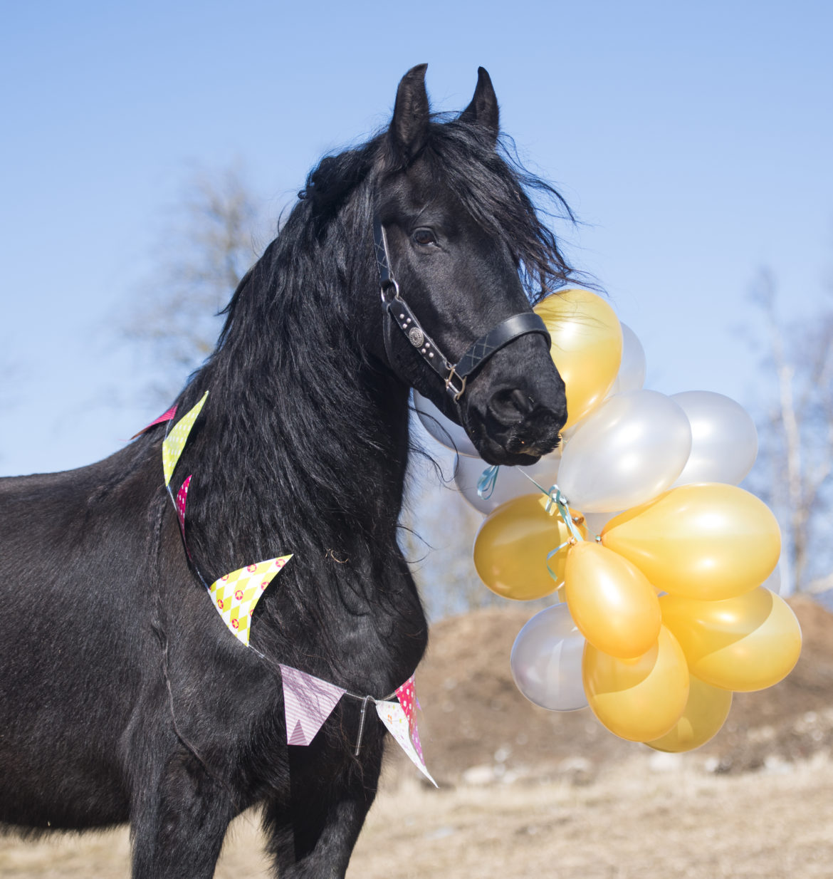 Life With A Friesian Dream Horse
